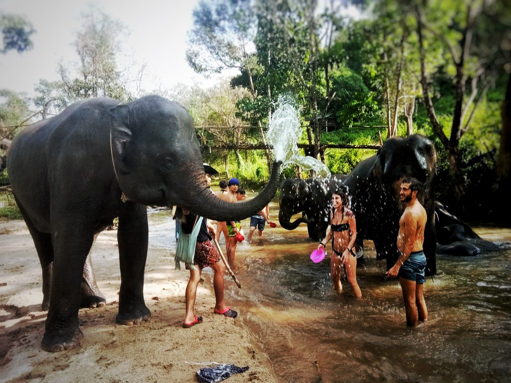 Thailandia ; a day with the elephants